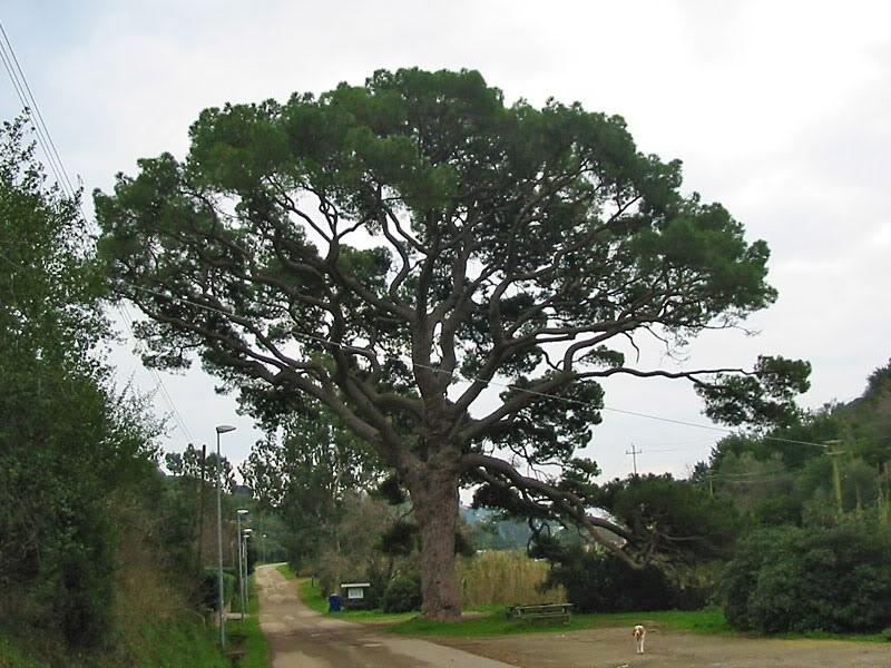 Sale su un albero di 5 metri per buttarsi di sotto, attimi di paura per un 13 enne