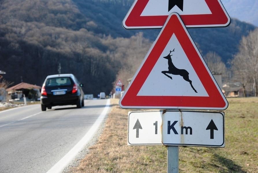 Fauna selvatica e viabilità, progetto per la riduzione degli incidenti